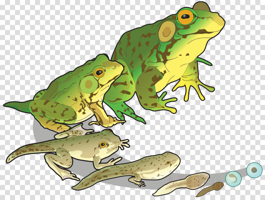 Animal growth clipart