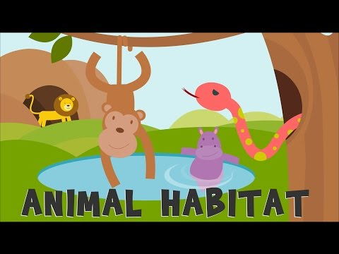 Cliparts for school for 3 graders with animals svg free stock Animal Habitats | Animal Homes | Animals video for kids | - YouTube svg free stock