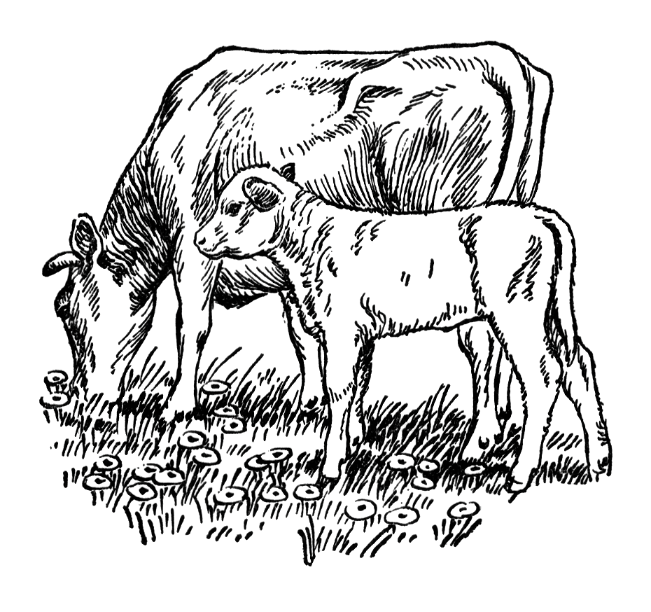 Animal in field black and white clipart clip freeuse download Cows | Free Stock Photo | Vintage illustration of a cow and calf ... clip freeuse download