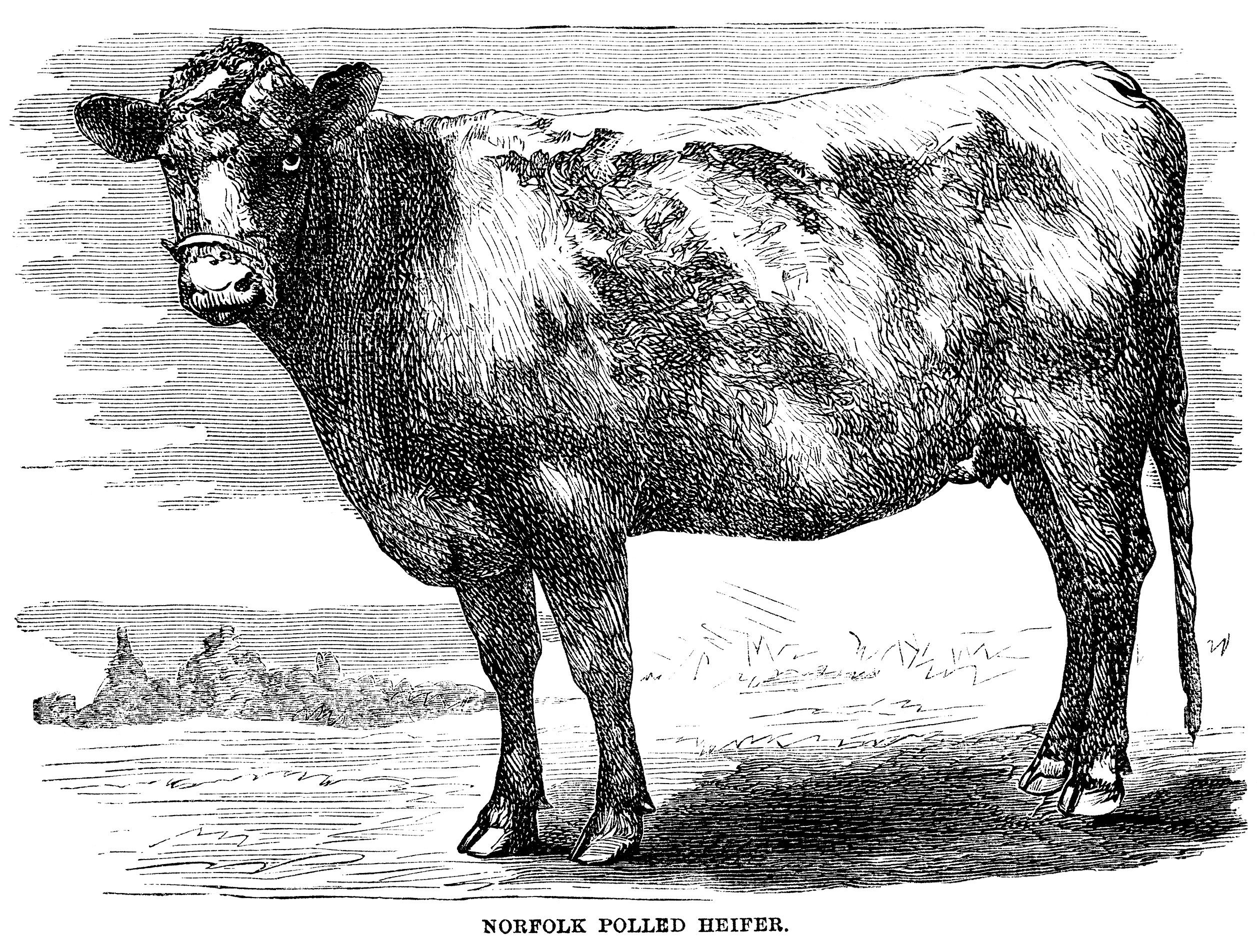 Animal in field black and white clipart image download Here is a vintage engraving of a cow standing in a field with trees ... image download