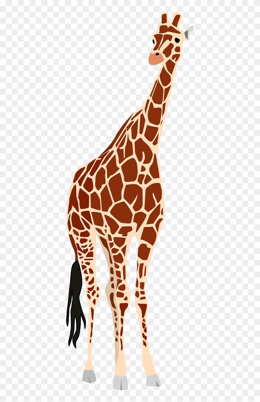 Animal kingdom realistic clipart photo clip stock Giraffe, Africa, Safari, Wildlife, Animal, Zoo, Nature - Africa Wild ... clip stock