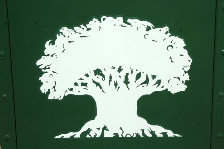 Animal kingdom tree clipart - ClipartFest svg