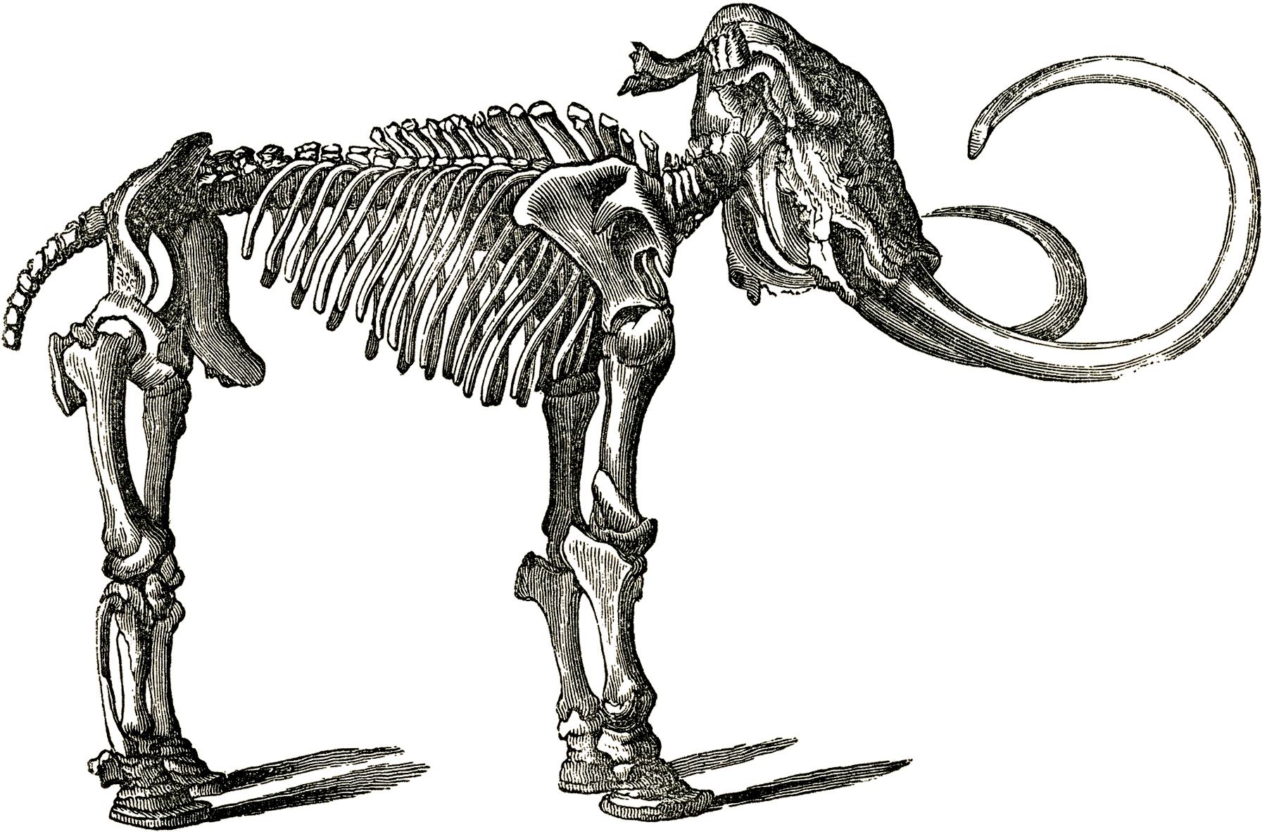 Animal skeleton clipart vector royalty free stock Free Bones Skeleton Cliparts, Download Free Clip Art, Free Clip Art ... vector royalty free stock