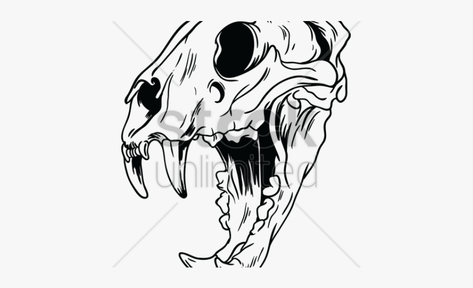 Animal skeleton clipart jpg library Skeleton Clipart Tiger - Animal Skull Clipart Black And White ... jpg library