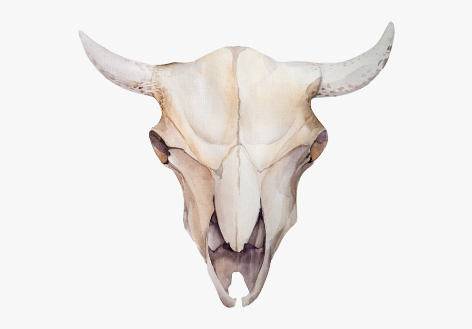 Animal skeleton clipart vector free Animal Skulls Skeleton Bone - Cow Skull Head Watercolor #2148376 ... vector free