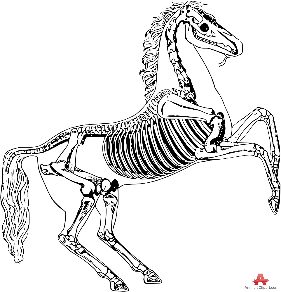 Animal skeleton clipart png free Animal Skeleton Drawing | Free download best Animal Skeleton Drawing ... png free