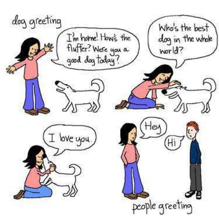 Dog Greeting vs People Greeting! FUNNY! | Animal Fair | Wendy ... picture