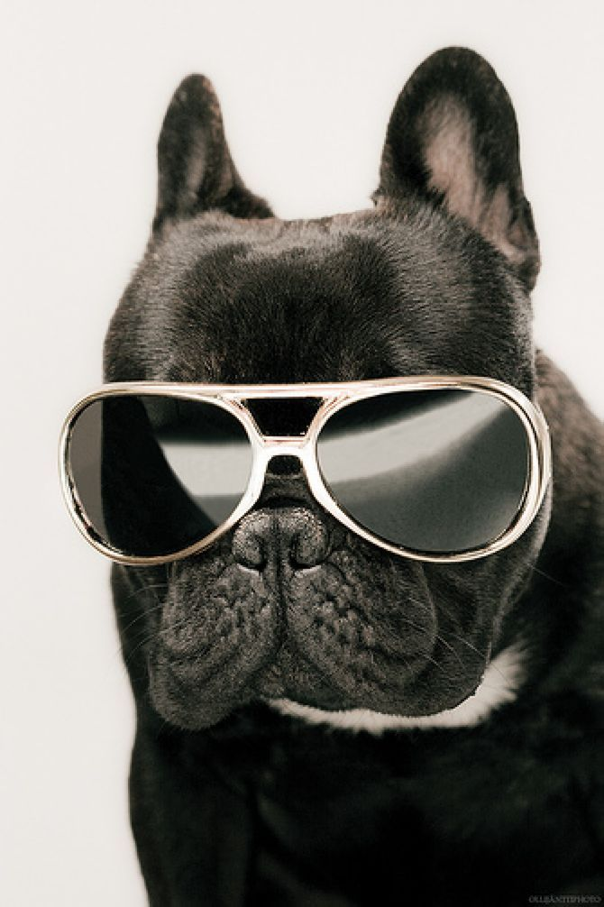 Animal with silly goggles clipart clipart transparent 33 Animals Wearing Glasses   Dogs   Its friday quotes, Funny, Dogs clipart transparent