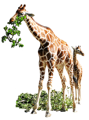Animals eating clipart png freeuse stock Animal Clip Art png freeuse stock