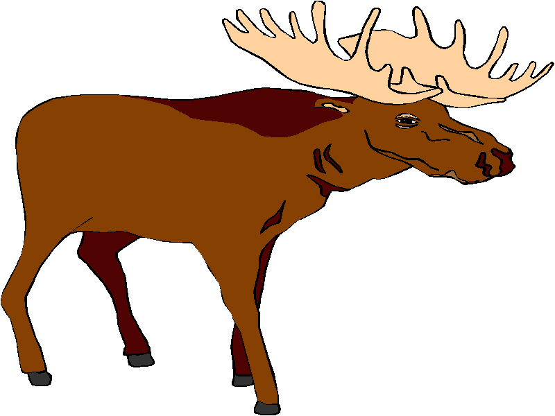 Bull moose clipart clipart free download 72+ Moose Clip Art | ClipartLook clipart free download