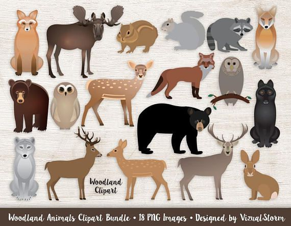 Animals clipart moose clip freeuse library Woodland Animals Clipart Bundle Forest Animal Graphics Woodland ... clip freeuse library