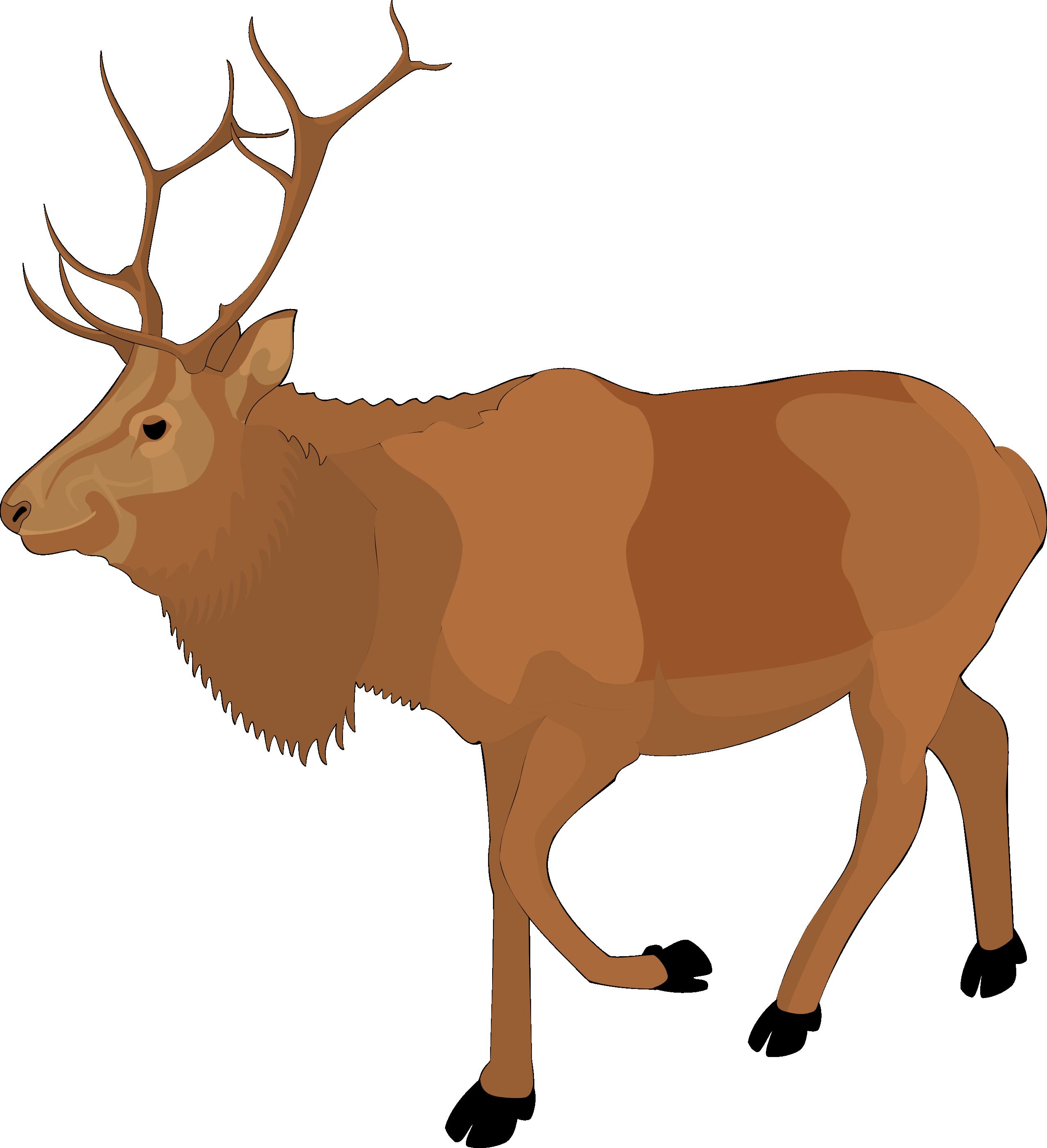 Animals elk clipart picture royalty free download Mammal,Vertebrate,Reindeer,Deer,Elk,Clip art,Wildlife,Antler ... picture royalty free download