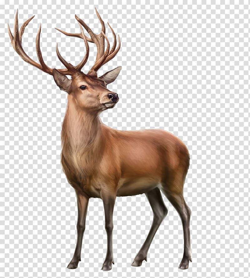 Animals elk clipart clip art download Elk Reindeer Animal, deer transparent background PNG clipart   HiClipart clip art download