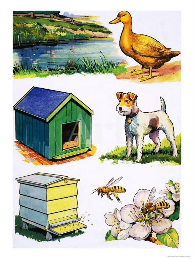 Animals homes clipart clip art freeuse Animals and Their Homes Giclee Print by | Art.com clip art freeuse