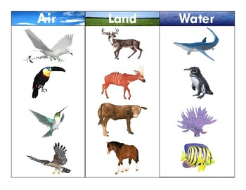 Animals on land clipart free stock Air-Land-Water Animals:Realistic Clipart-Three Part Card Set 2 free stock