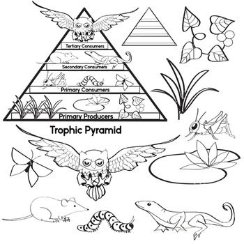 Animals pyramid clipart image free library Free Science Clip Art - Trophic Pyramid - Food Chain - Color ... image free library
