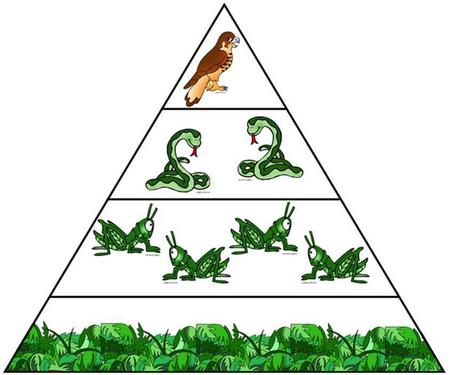Animals pyramid clipart jpg black and white stock PowerSchool Learning : 4th Grade : Lesson Three: Energy Pyramids jpg black and white stock