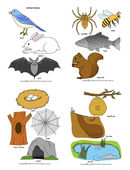 Animals that live underground clipart picture black and white library Here\'s a large set of pictures of animals and their homes. Good for ... picture black and white library