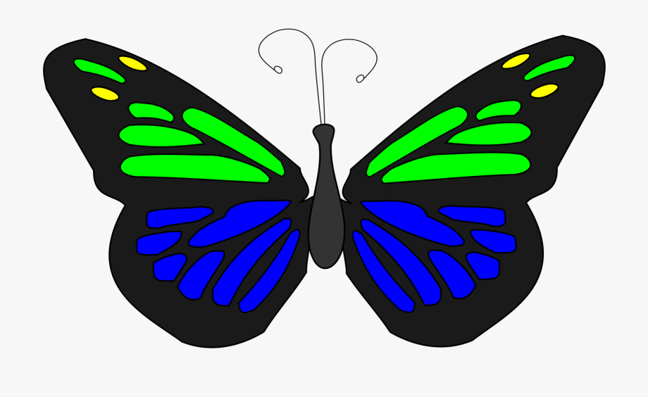 Animated butterfly clipart free banner library download Butterfly Animation - Brush-footed Butterflies #2538148 - Free ... banner library download