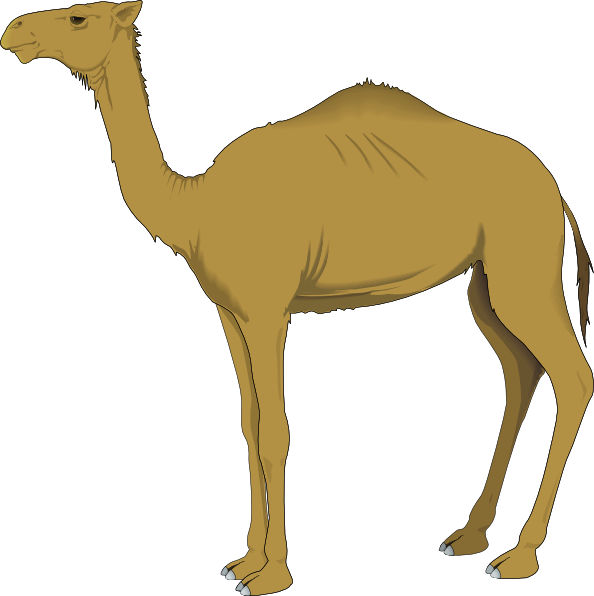 Animated camel clipart free clip art library Free Cartoon Pictures Of Camels, Download Free Clip Art, Free Clip ... clip art library