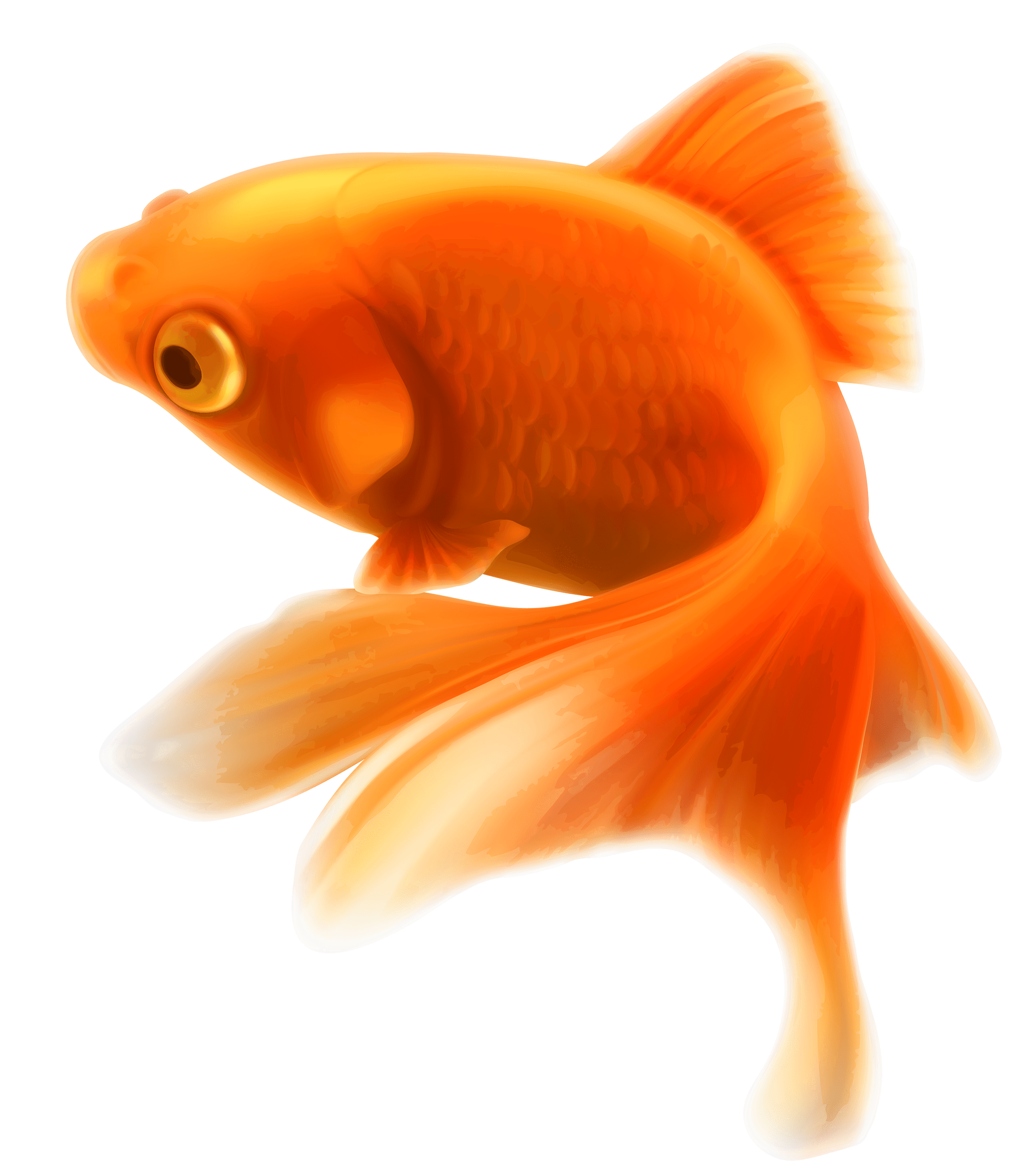 Goldfish with crown clipart clip Gold Fish transparent PNG - StickPNG clip