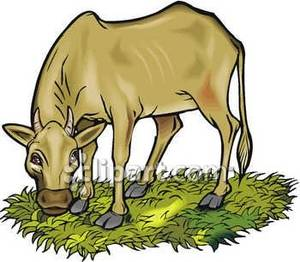 Animated cow eating grass clipart graphic transparent stock Cow Eating Clipart | Free download best Cow Eating Clipart on ... graphic transparent stock