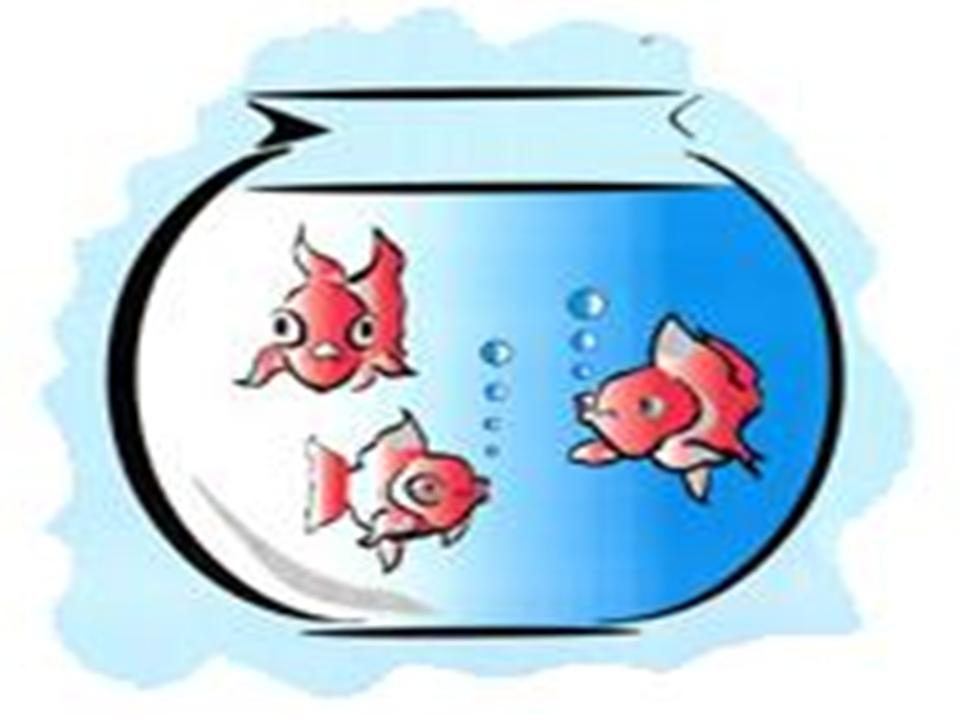 Animated fish bowl clipart jpg library library Free Pictures Of Animated Fish, Download Free Clip Art, Free Clip ... jpg library library