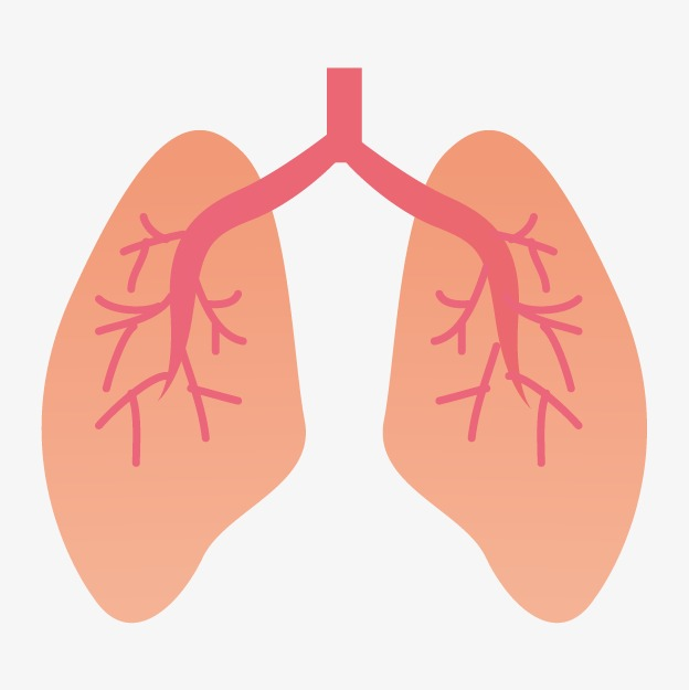 Animated lungs clipart svg library Animated Lung Png & Free Animated Lung.png Transparent Images #14137 ... svg library