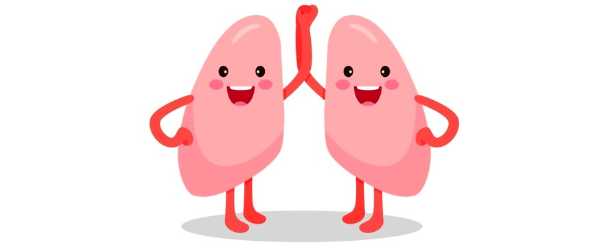 Animated lungs clipart png transparent Lungs Cartoon Clipart | Free download best Lungs Cartoon Clipart on ... png transparent