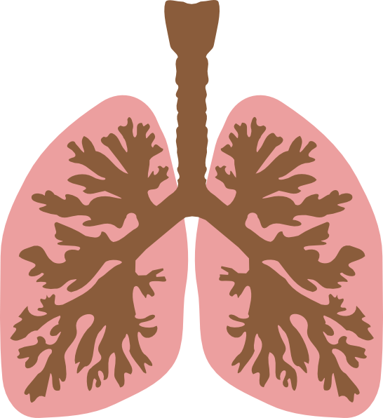 Animated lungs clipart clip art free download Lungs And Bronchus Clip Art at Clker.com - vector clip art online ... clip art free download