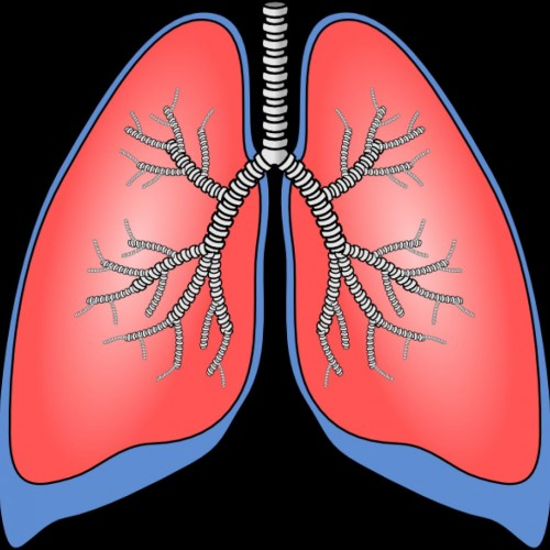 Animated lungs clipart clip black and white download Free Lungs Cliparts, Download Free Clip Art, Free Clip Art on ... clip black and white download