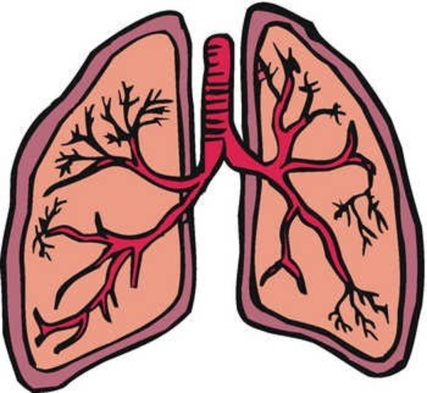 Animated lungs clipart png transparent library Dazzling Design Ideas Lungs Clipart Lung C #221839 - Clipartimage.com png transparent library