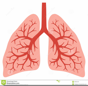 Animated lungs clipart clip art free Free Animated Lungs Clipart | Free Images at Clker.com - vector clip ... clip art free