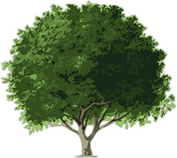 Animated trees clipart banner library stock Free Animated Trees - Tree Clipart - Flowers banner library stock