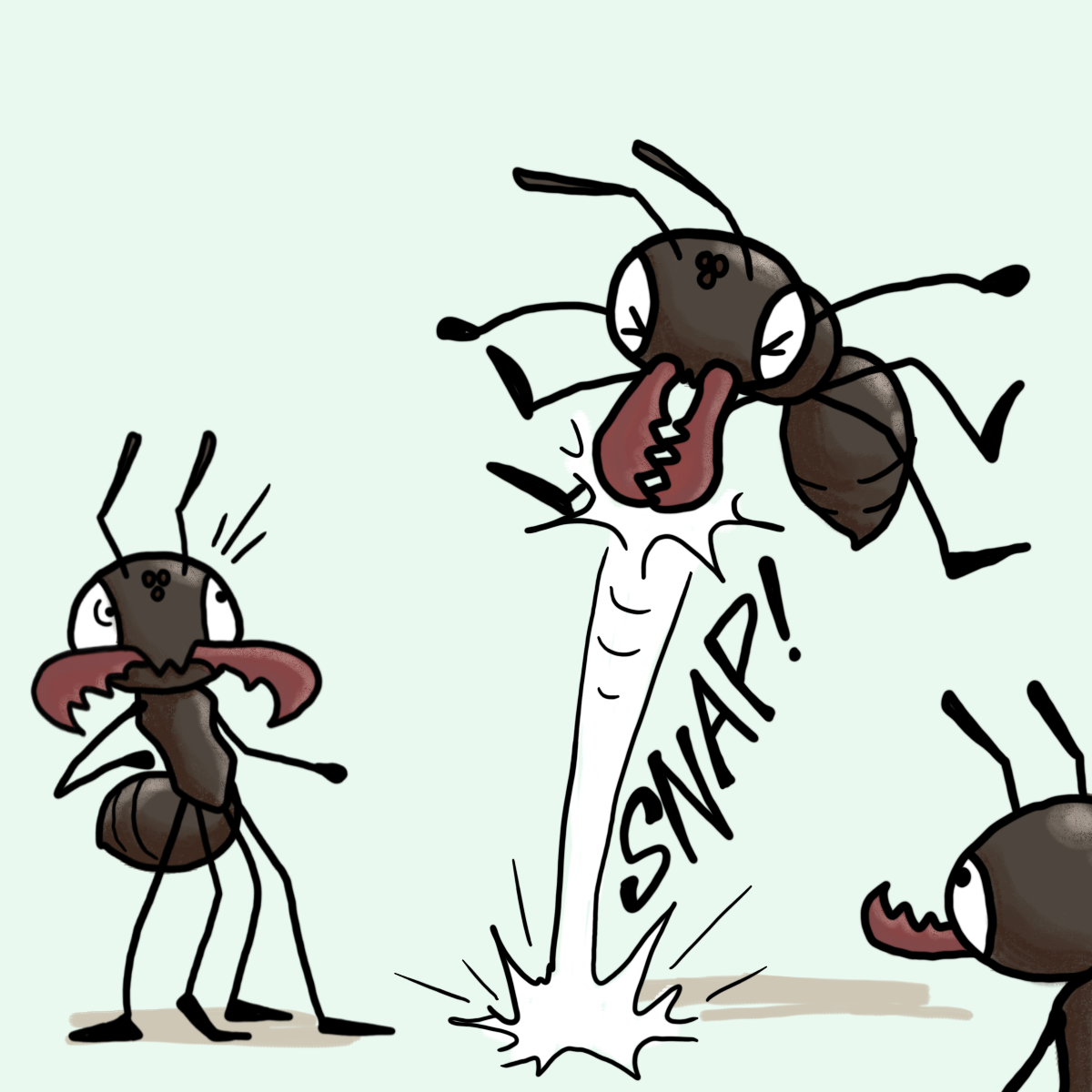 Ant clipart with mandible jpg black and white library The Draw Something Daily Initiative — March-ing Ants: Trap-jaw ants ... jpg black and white library