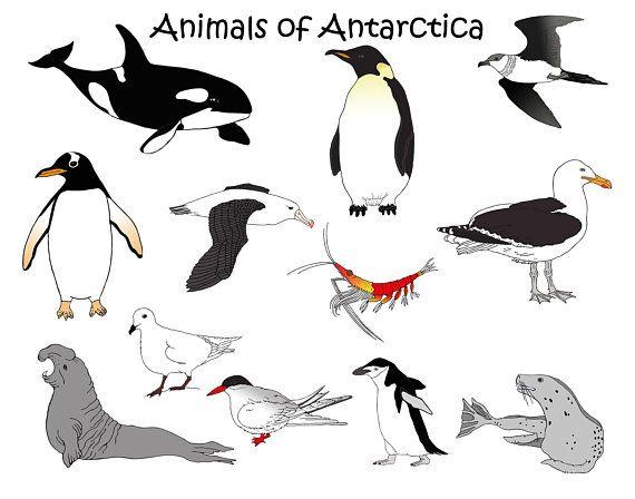 Antartica clipart clip art library Antarctica Animals Downloadable clipart orca penguin seal krill ... clip art library
