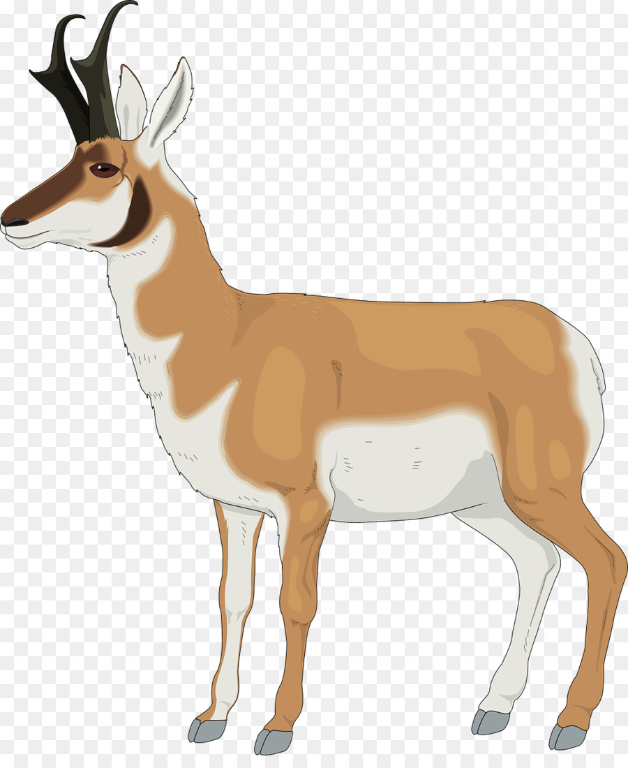 Antelope clipart png clipart free Orange Background png download - 1065*1280 - Free Transparent ... clipart free