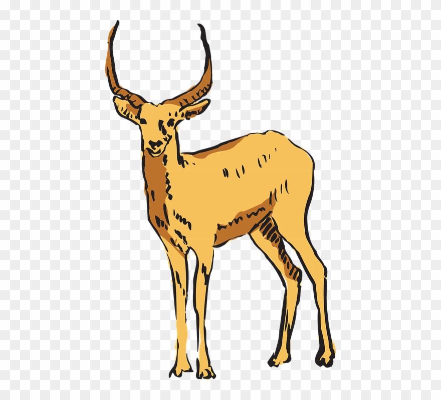 Antelope clipart png clip art royalty free Antelope Clipart Transparent - Antilopa Png (#724771) - PinClipart clip art royalty free