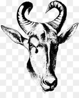 Antelope horn clipart picture library library Free download Cattle Drawing Antelope Clip art - Antelope horn png. picture library library