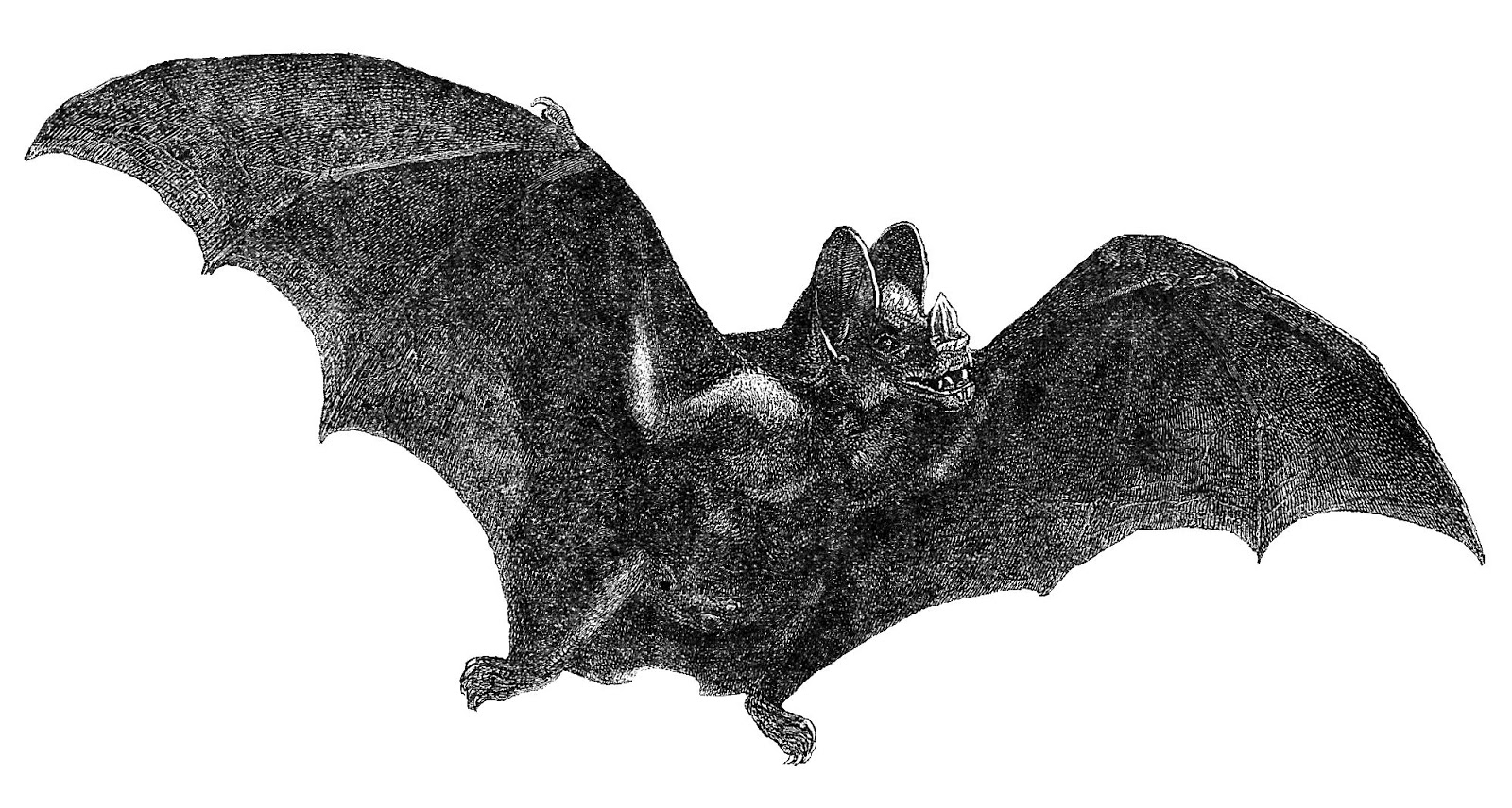 Antique bat free clipart clip royalty free stock Free Vintage Bat Cliparts, Download Free Clip Art, Free Clip Art on ... clip royalty free stock