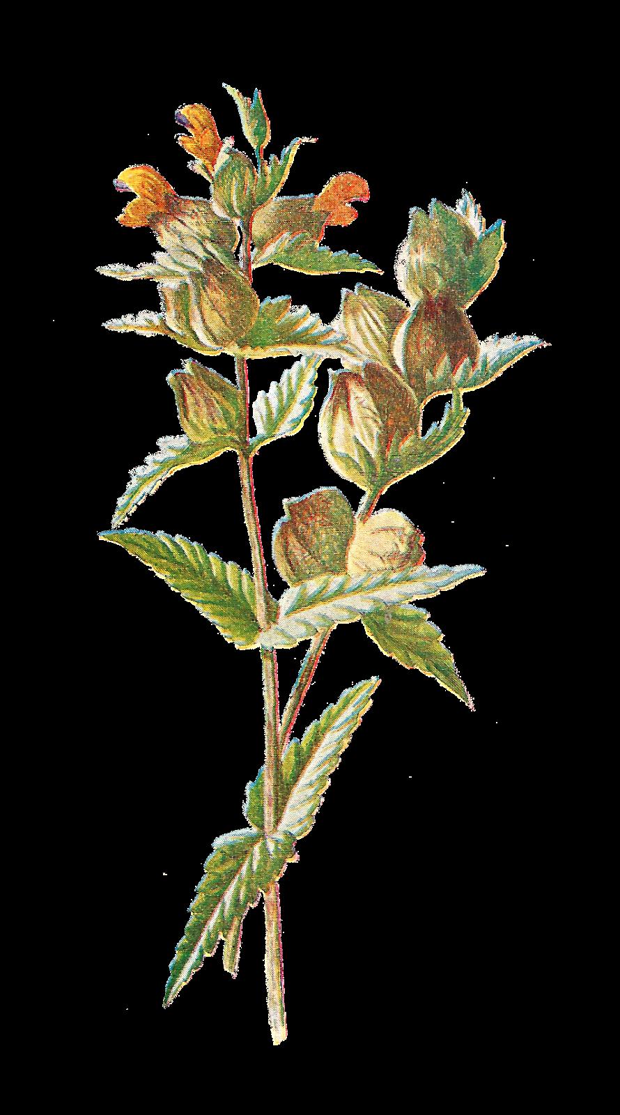Digital flower clipart banner royalty free Antique Images: Free Digital Flower Clip Art: Wildflower Graphic o ... banner royalty free