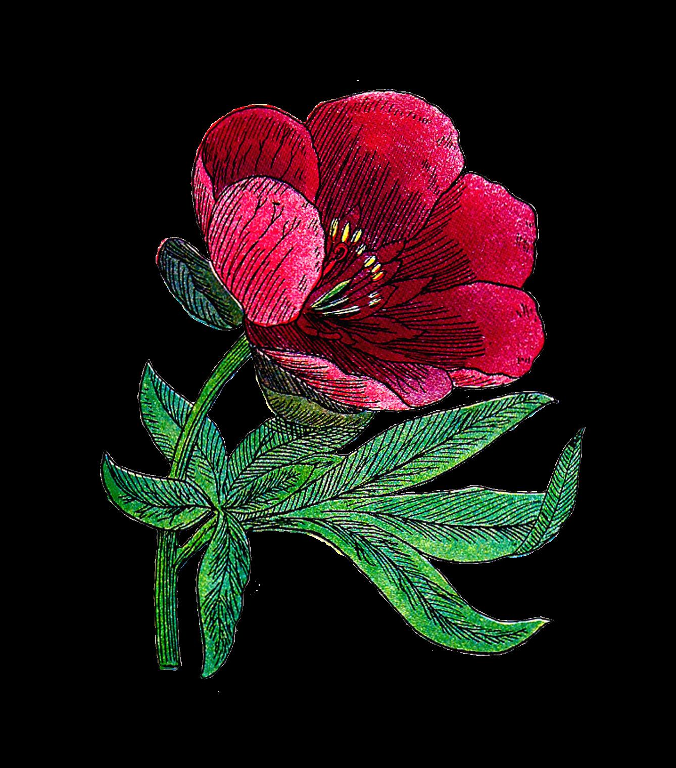 Peony flower clipart clip free stock Clip Art Designs, Vector Clip Art Graghic: Free Flower Clip Art ... clip free stock