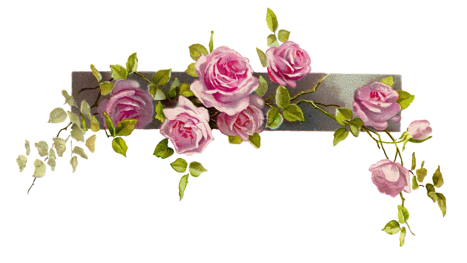 January flower clipart transparent library Antique Images: Free Flower Graphic: Vintage Pink Rose Clip Art ... transparent library