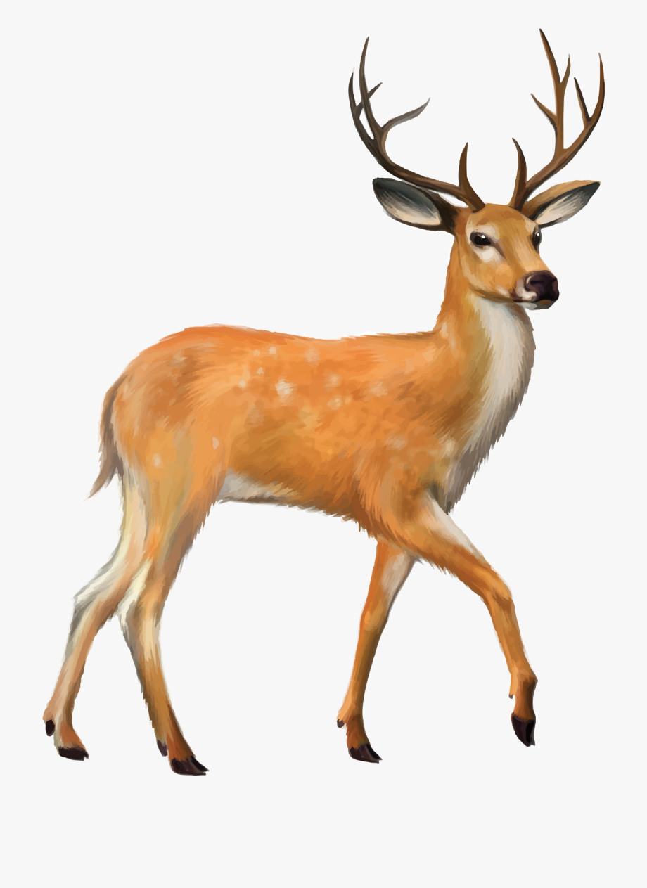 Antlered deer jumping clipart free banner stock Deer Vector Mule - Deer Png #198539 - Free Cliparts on ClipartWiki banner stock