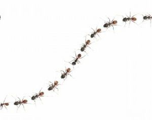 Ants trail clipart jpg royalty free download Trail of ants clipart - Clip Art Library jpg royalty free download