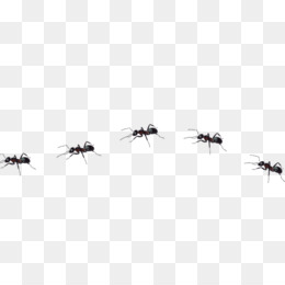 Ants trail clipart svg library Cartoon Ant PNG - Cartoon Ant, Cartoon Ant Farm, Cartoon Ant Hill ... svg library