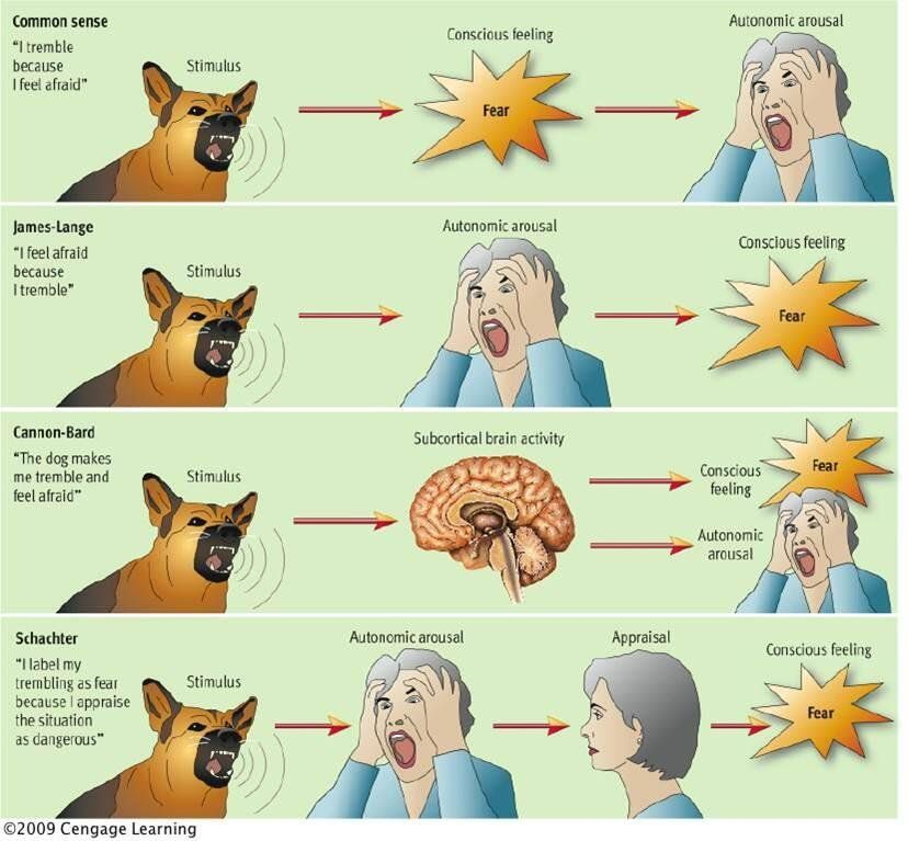 Ap psych personaly clipart library Image result for james lange cannon bard | Psychology & Sociology ... library