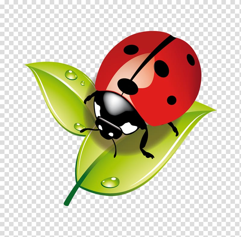 Aphid clipart png royalty free library Insect Ladybird Child Aphid Ecology, insect transparent background ... png royalty free library
