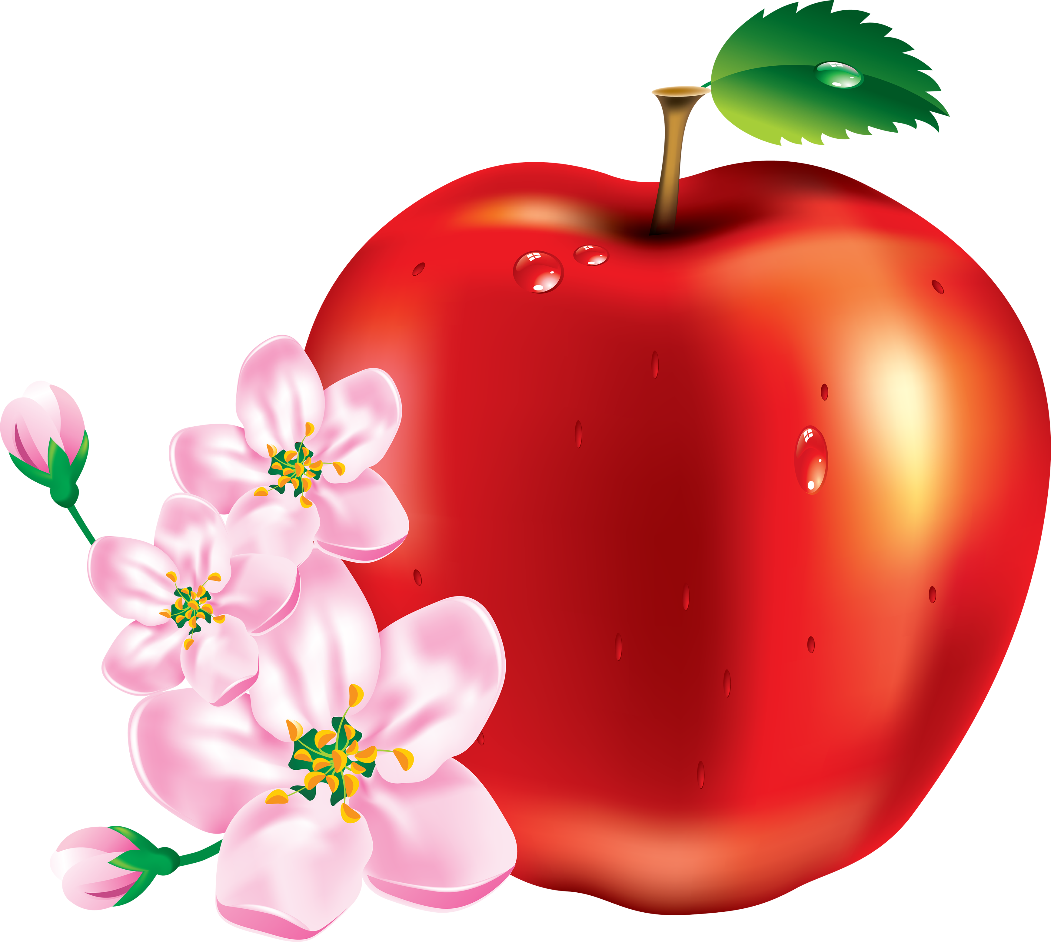 One apple clipart clipart freeuse stock Red Apple Forty-one | Isolated Stock Photo by noBACKS.com clipart freeuse stock