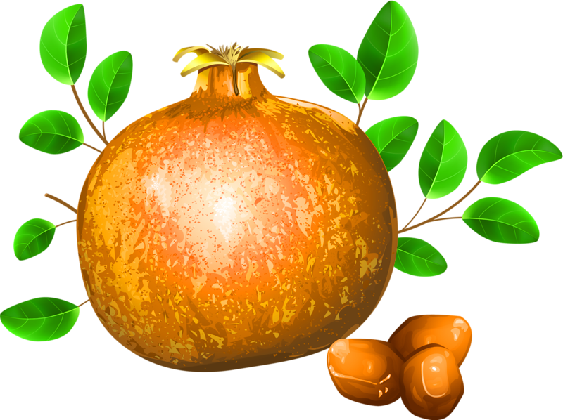 Apple and orange seeds clipart banner black and white stock Pomegranate Fruit Drawing Illustration - pomegranate 800*598 ... banner black and white stock